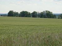 Prodej pozemku v lokalitě Kobylnice, okres Brno-venkov - obrázek č. 3