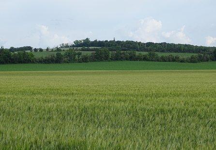 Prodej pozemku v lokalitě Kobylnice, okres Brno-venkov - obrázek č. 1