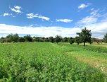 Ořechov, orná půda vedená jako stavební rezerva, 1731 m², příjezdová cesta - pozemek - Pozemky Brno-venkov
