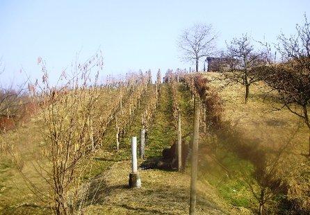 Prodej pozemku v lokalitě Mutěnice, okres Hodonín - obrázek č. 1
