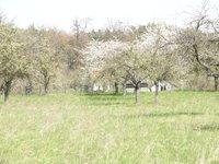 Prodej pozemku v lokalitě Luleč, okres Vyškov - obrázek č. 3