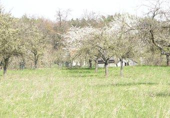 Prodej pozemku v lokalitě Luleč, okres Vyškov - obrázek č. 1
