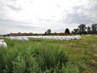 Prodej pozemku v lokalitě Božice, okres Znojmo - obrázek č. 5