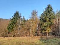 Prodej pozemku v lokalitě Dolní Loučky, okres Brno-venkov - obrázek č. 5