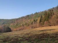Prodej pozemku v lokalitě Dolní Loučky, okres Brno-venkov - obrázek č. 4