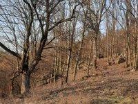 Prodej pozemku v lokalitě Dolní Loučky, okres Brno-venkov - obrázek č. 8