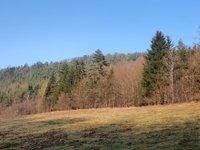 Prodej pozemku v lokalitě Dolní Loučky, okres Brno-venkov - obrázek č. 3