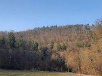 Prodej pozemku v lokalitě Dolní Loučky, okres Brno-venkov - obrázek č. 2