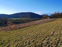 Prodej pozemku v lokalitě Lomnička, okres Brno-venkov - obrázek č. 3