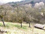 Olomučany - zahrada 2.536 m2, montovaná chata, sklep, potok - zahrada - Pozemky Blansko