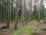 Blízkov - lesní pozemek 37.063 m3 - pozemek - Pozemky Žďár nad Sázavou