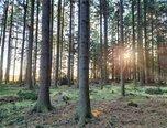 Suchý - lesní pozemek 6.015 m2 - pozemek - Pozemky Blansko