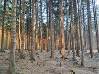 Prodej pozemku v lokalitě Suchý, okres Blansko - obrázek č. 2