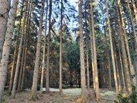 Prodej pozemku v lokalitě Suchý, okres Blansko - obrázek č. 4