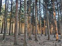 Prodej pozemku v lokalitě Suchý, okres Blansko - obrázek č. 9