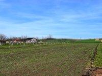 Prodej pozemku v lokalitě Terezín, okres Hodonín - obrázek č. 7