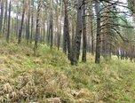 Žďárec - lesní pozemek 13.812 m2 - pozemek - Pozemky Brno-venkov