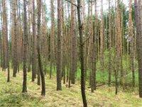 Prodej pozemku v lokalitě Žďárec, okres Brno-venkov - obrázek č. 3