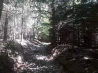 Prodej pozemku v lokalitě Velenov, okres Blansko - obrázek č. 5