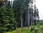 Sklené - Žďárské vrchy , louky, lesní pozemky 123164 m2 - pozemky - Pozemky Žďár nad Sázavou