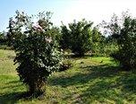 Brno - Slatina, pozemek pro komerční výstavbu 1245 m2 - pozemek - Pozemky Brno