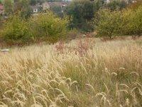 Prodej pozemku v lokalitě Lysice, okres Blansko - obrázek č. 6