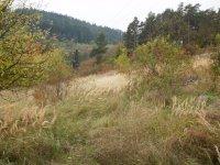 Prodej pozemku v lokalitě Lysice, okres Blansko - obrázek č. 5