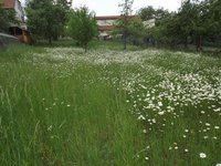 Prodej pozemku v lokalitě Žernovník, okres Blansko - obrázek č. 4