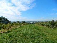 Prodej pozemku v lokalitě Suchohrdly, okres Znojmo - obrázek č. 2