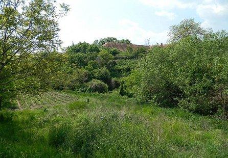 Prodej pozemku v lokalitě Džbánice, okres Znojmo - obrázek č. 1