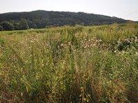 Prodej pozemku v lokalitě Račice-Pístovice, okres Vyškov - obrázek č. 4