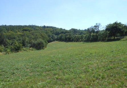 Prodej pozemku v lokalitě Javůrek, okres Brno-venkov - obrázek č. 1