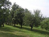 Prodej pozemku v lokalitě Rozsíčka, okres Blansko - obrázek č. 4