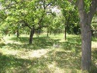 Prodej pozemku v lokalitě Dolní Kounice, okres Brno-venkov - obrázek č. 8