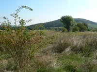 Prodej pozemku v lokalitě Omice, okres Brno-venkov - obrázek č. 3