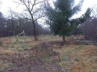 Prodej pozemku v lokalitě Drnovice, okres Vyškov - obrázek č. 4