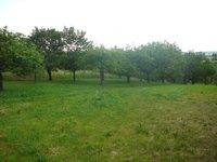 Prodej pozemku v lokalitě Hustopeče, okres Břeclav - obrázek č. 2