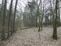 Prodej pozemku v lokalitě Brno, okres Brno - obrázek č. 2