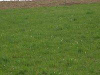 Prodej pozemku v lokalitě Obora, okres Blansko - obrázek č. 2
