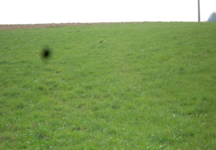 Prodej pozemku v lokalitě Obora, okres Blansko - obrázek č. 1