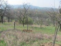 Prodej pozemku v lokalitě Dolní Kounice, okres Brno-venkov - obrázek č. 4