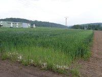 Prodej pozemku v lokalitě Drásov, okres Brno-venkov - obrázek č. 2