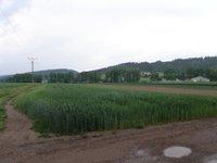 Prodej pozemku v lokalitě Drásov, okres Brno-venkov - obrázek č. 3