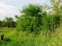 Prodej pozemku v lokalitě Dolní Kounice, okres Brno-venkov - obrázek č. 2