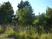 Prodej pozemku v lokalitě Svinošice, okres Blansko - obrázek č. 8