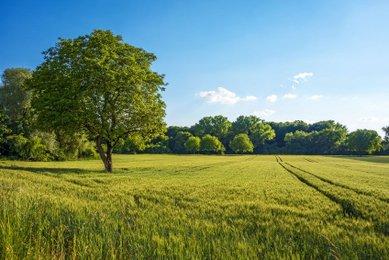 Jak vyjmout pozemek ze zemědělského půdního fondu
