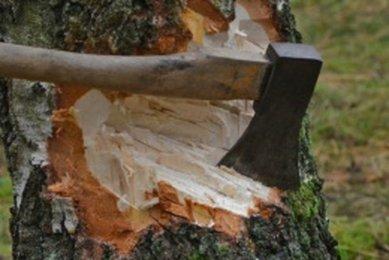 Kácení stromů bez pokut a bez povolení
