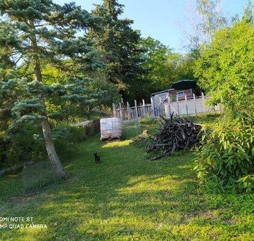 Pronájem zahrady  1190m² - Brno - Bosonohy