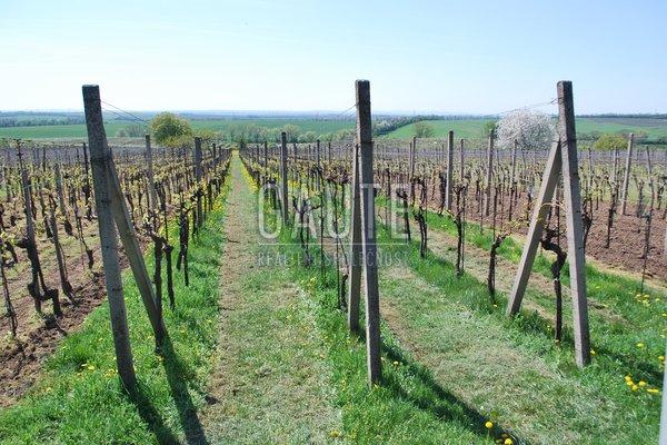 Prodej, Sady a vinice, 1343m²