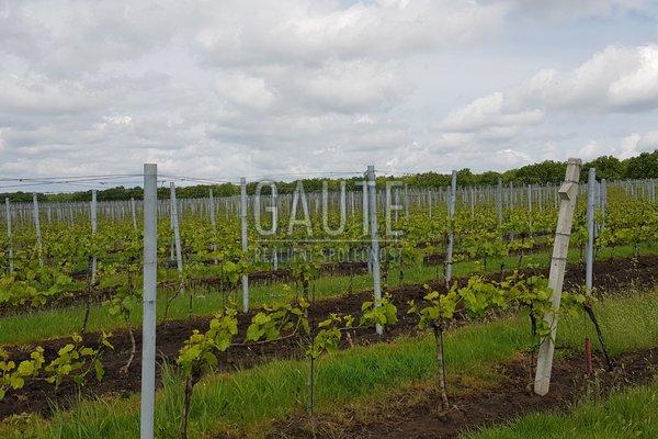 Prodej, Sady a vinice, 43823m²